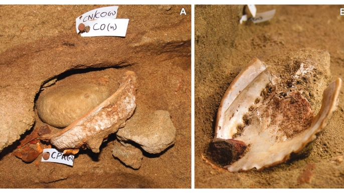 A researcher displays red ochre residue found inside an abalone shell in Blombos Cave. (Credit: Grethe Moell Pedersen)