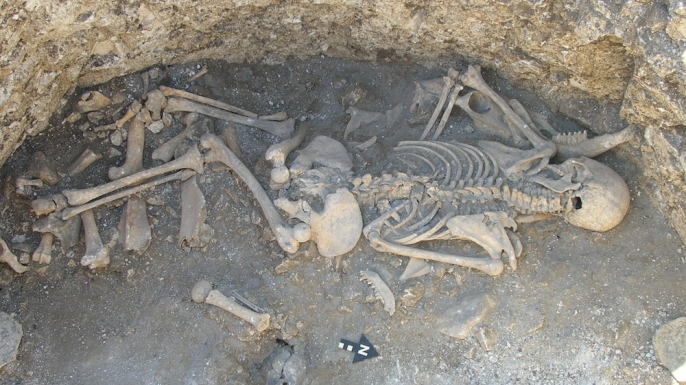 iron age graves in britain yield hybrid animals and human, Skeleton