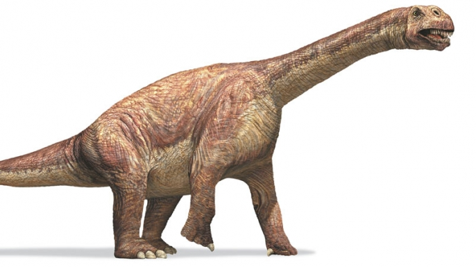 Camarasaurus, dinosaurs