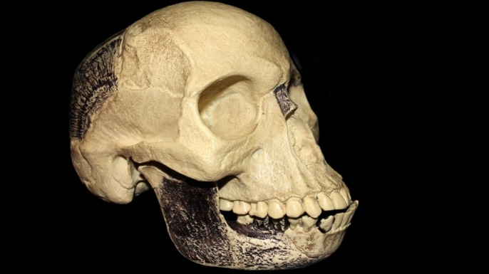 piltdown man, hoaxes