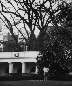 Eisenhower playing golf on White House lawn. (Credit: Hank Walker/The LIFE Picture Collection/Getty Images)
