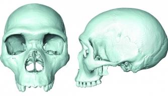 Scientists Recreate Skull of Human-Neanderthal Ancestor
