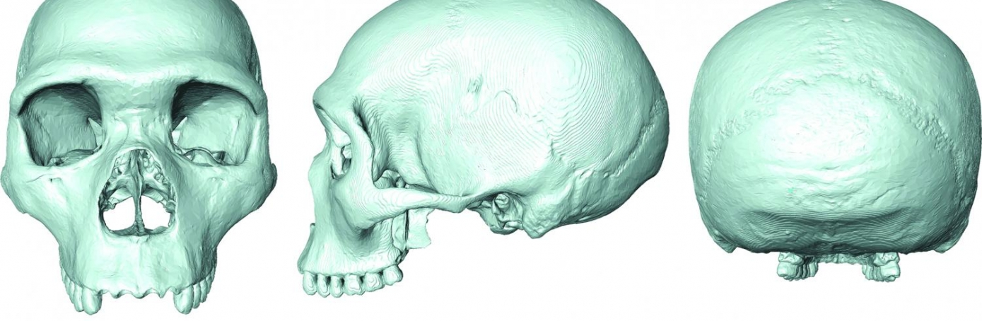 The 'virtual fossil' of last common ancestor of humans and Neanderthals. (Credit: Dr. Aurélien Mounier)