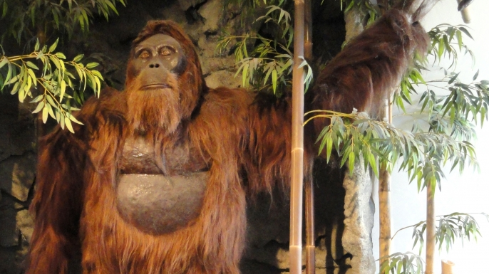 What the Gigantopithecus may have looked like. (Credit: Wikimedia Commons)