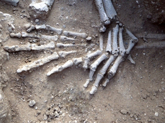 Detail of hands of in situ skeleton. Position suggests they had been bound. (Credit: Marta Mirazón Lahr)