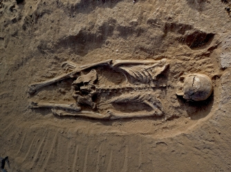 Skeleton of man lying prone in lagoon sediments with multiple lesions to skull. (Credit: Marta Mirazón Lahr)