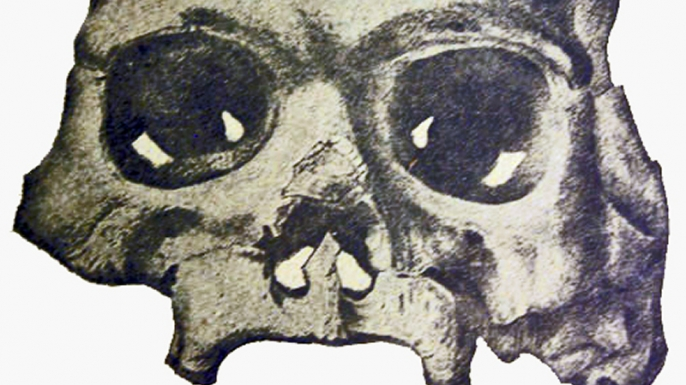 Drawing of the Calaveras Skull. (Credit: Public Domain)