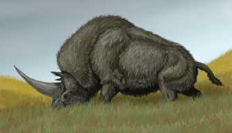 "Giant ""Siberian Unicorn"" and Humans May Have Roamed the World Together"