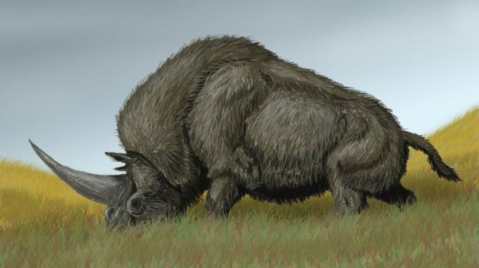 "Elasmotherium sibiricum, known as the ""Siberian Unicorn."" (Credit: Wikipedia)"