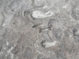 Homo Erectus footprints. (Sapienza University)
