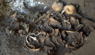 Skeletons located in the excavations of a shop. (Credit: Soprintendanza Pompei)