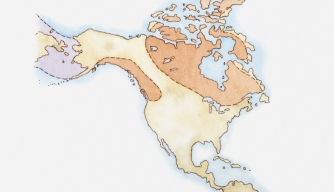 Illustration of North America and Greenland with areas covered in ice highlighted in red, land bridge in purple, c. 15,000 years ago. (Credit: Dorling Kindersley / Getty Images)