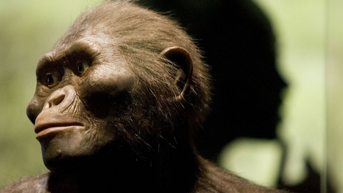 """A sculptor's rendering of the hominid Australopithecus afarensis is displayed as part of an exhibition that includes the 3.2 million year old fossilized remains of """"Lucy."""" (Credit: Dave Einsel / Getty Images)"""