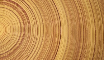 Tree Rings Could Hold Key to Dating Ancient History