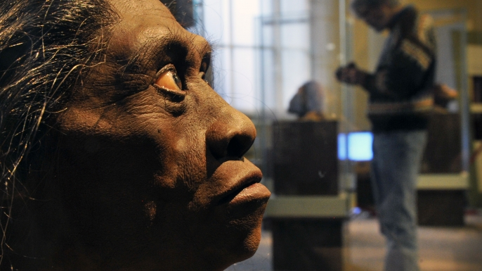 A sculpted model of Homo Floresiensis getting ready for display at the Smithsonian Museum of Natural History, in 2010.