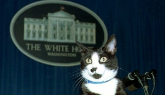 Socks, the White House cat, sits atop the podium in the White House press briefing room 19 March 1994. (Credit: JENNIFER YOUNG/AFP/Getty Images)