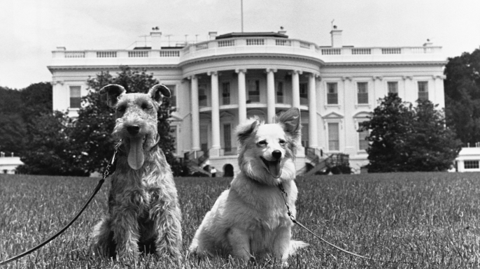 The Kennedy family dogs Charlie and Pushinka, at the White House. (Credit: CORBIS/Getty Images)