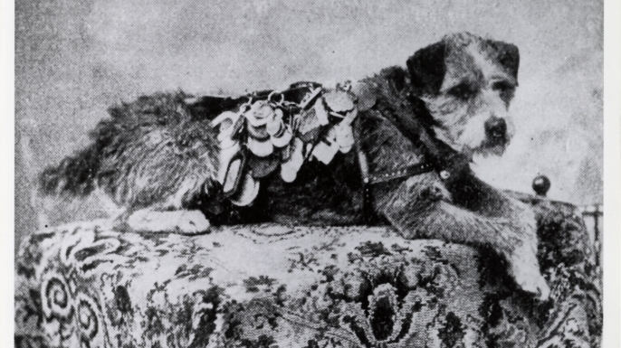 Owney with some of his dog tags. (Credit: Public Domain)