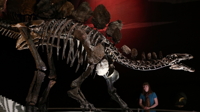 The world's most complete Stegosaurus fossil on display at London's Natural History Museum. (