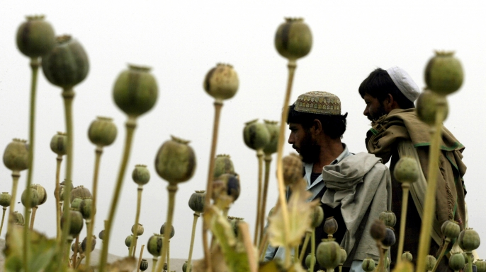 Afghan farmers work in a poppy field near the Kabul/Jalalabad road April 19, 2004.