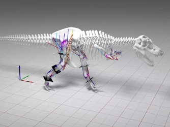 New research from the University of Manchester says the sheer size and weight of  the T. rex means it couldn't move at high speed, as its leg-bones would have buckled under its own weight load. (Credit: University of Manchester)