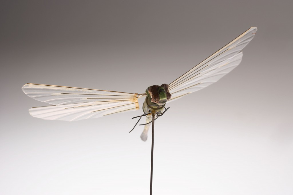 11_dragonfly