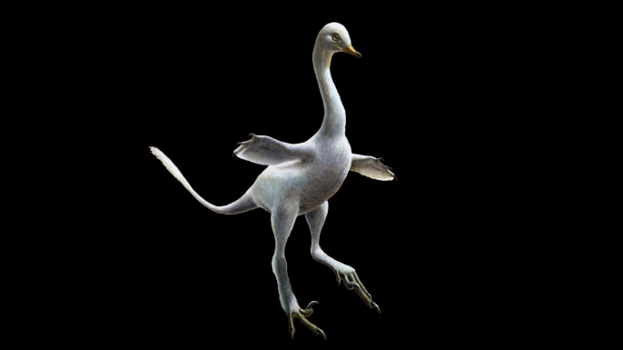 This illustration of the Halszkaraptor escuilliei dinosaur. The creature, about 18 inches (45 centimeters) tall. (Source Image: Lukas Panzarin and Andrea Cau via AP)