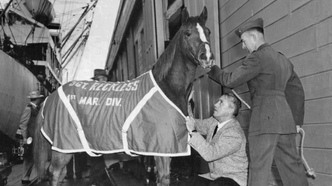 U.S. Marine Corps Staff Sgt. Reckless preparing to go to Marine Corps Base Camp Pendleton, California after serving in the Korean War with the 5th Marine Regiment. (Courtesy of the United States Marine Corps Archive)