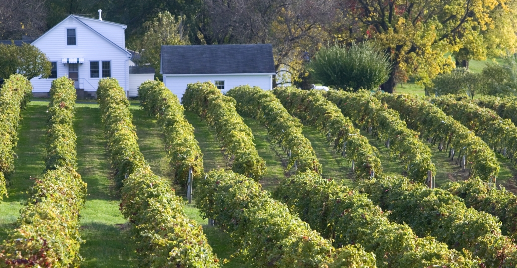 vineyard, oldest vineyard, augusta, missouri