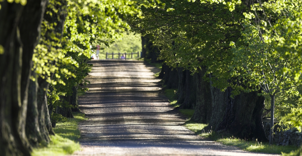 portsmouth, rhode island, anne hutchinson, trees, road