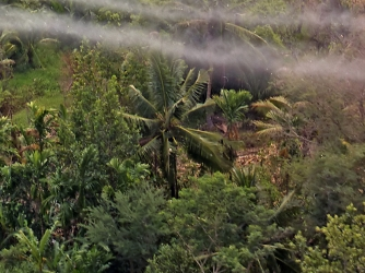 an introduction to the history of agent orange Research on health effects of herbicide exposure dioxin is a highly toxic substance found in agent orange and some other herbicidesstudies suggest that this chemical may be related to a.