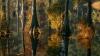 delaware, bald cypress trees, trussum pond, laurel