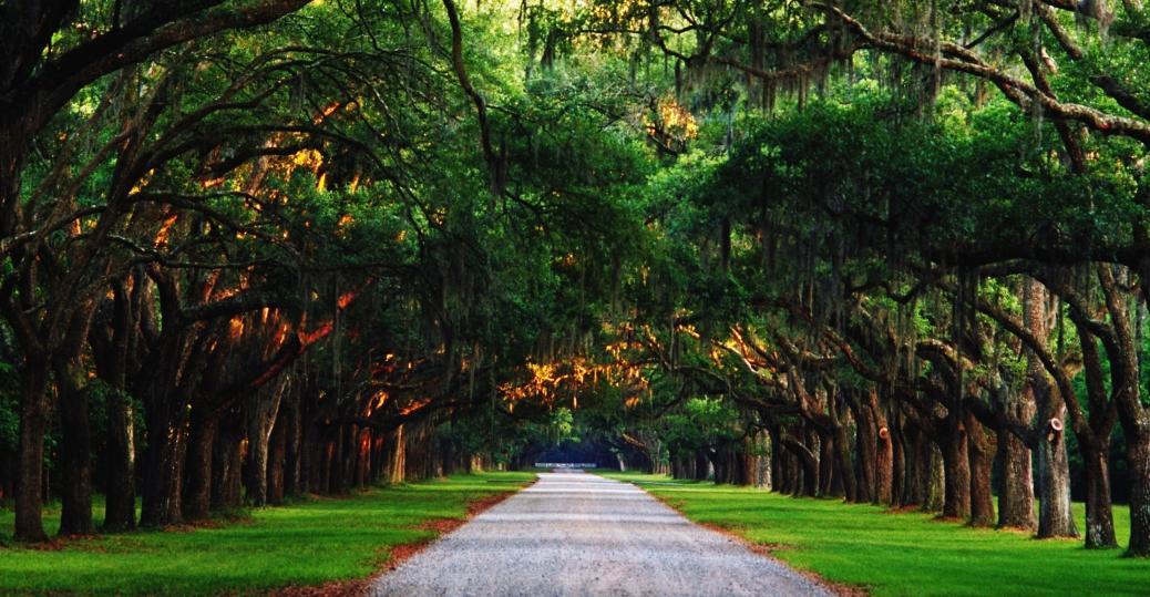 trees, road, wornsloe historic site, savannah, georgia