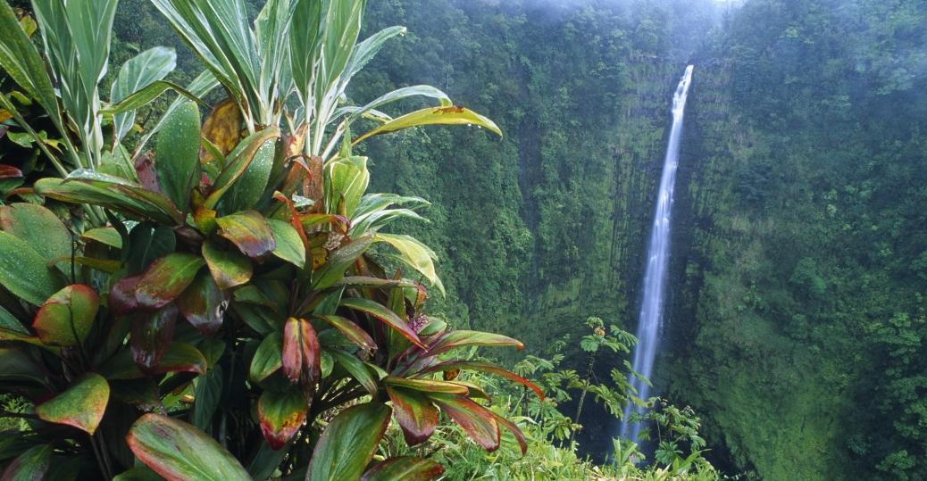 akaka falls, akaka state park, hawaii, waterfall