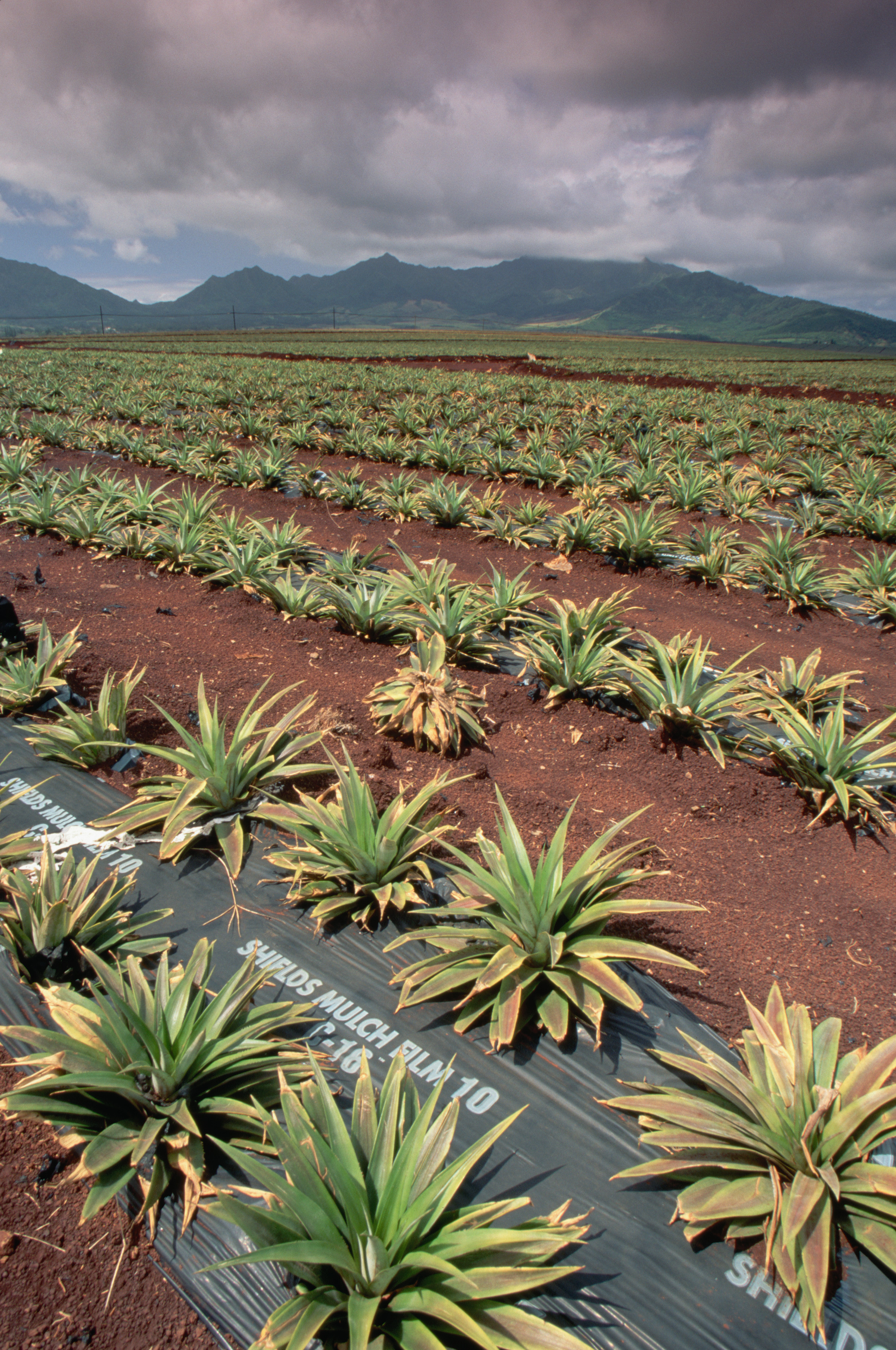 dole-pineapple-plantation - Hawaii Pictures - Hawaii ...