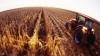 state nickname, nebraska, tree planter's state, cornhusker's state