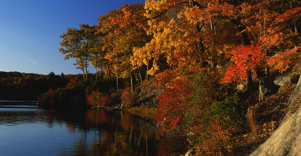 sugar maple, sugar maple tree, new york, state tree, lake, harriman state park