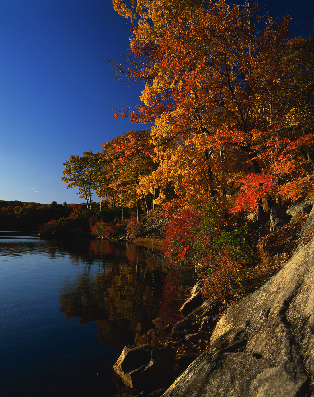 Maple Trees Along Lake In Autumn New York Pictures New York  # Un Muble De Tele En Lake