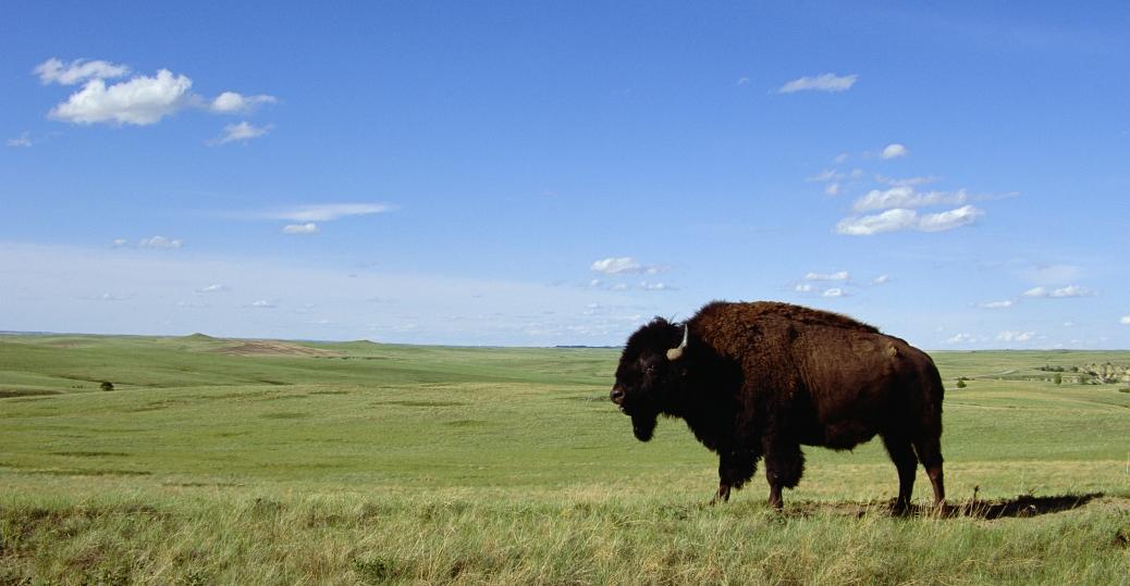 north dakota, theodore roosevelt, national park