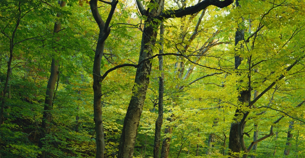 trees, forest, vermont, smugglers notch, foliage
