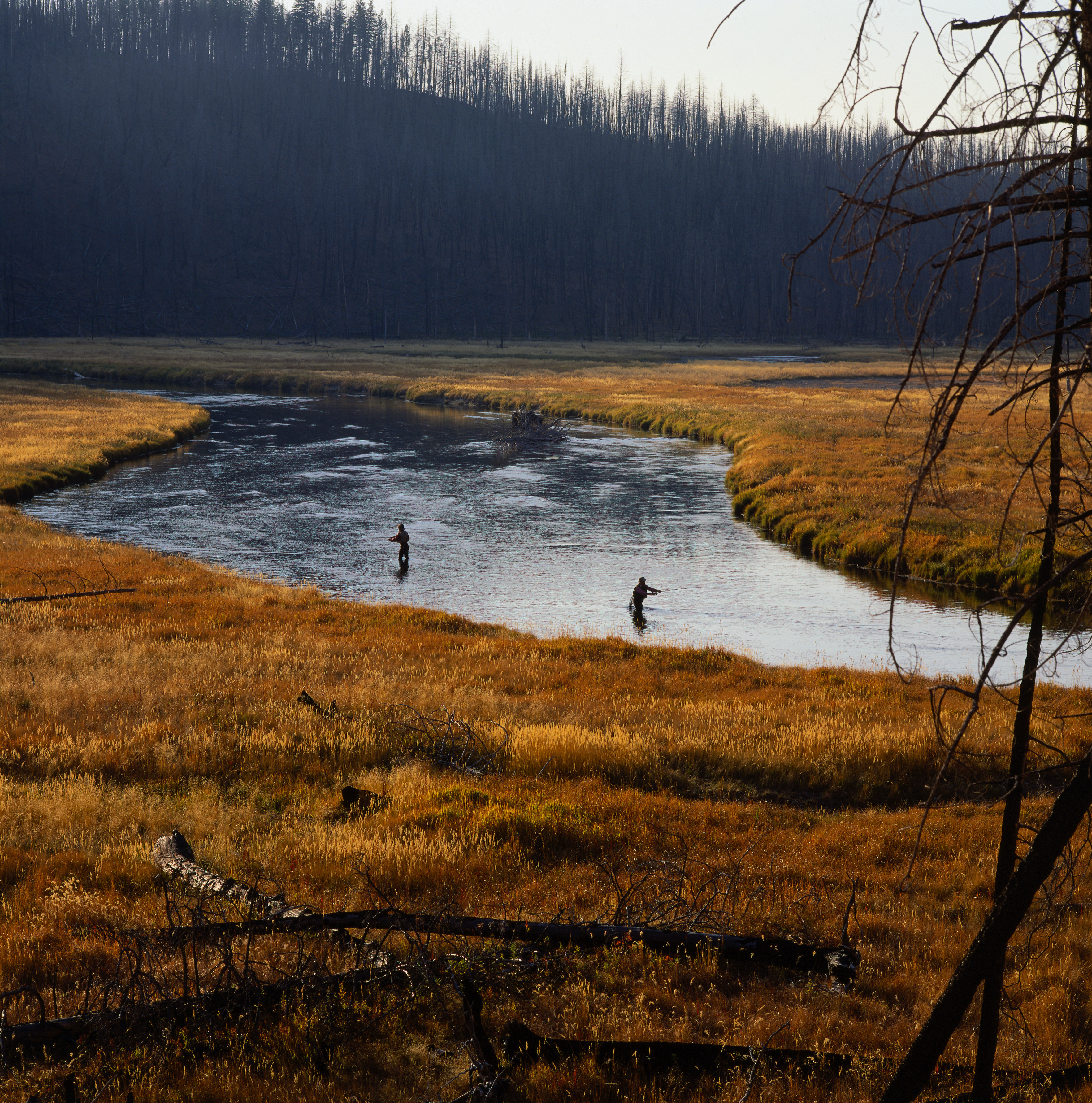 Fly fishing in madison river wyoming pictures wyoming for Madison river fly fishing