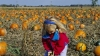 illinois, pumpkin patch, pumpkin picking, halloween