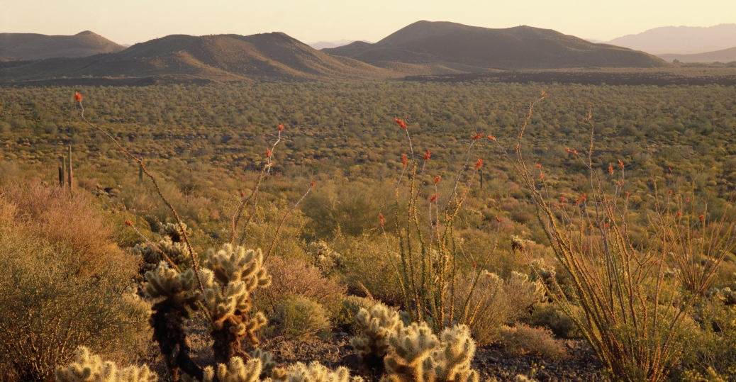 the sonoran desert, pinacate national park, sonora, mexico