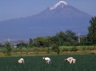 onions, harvesting onions, farm, chinameca village, morelos, mexico, popocatepetl volcano