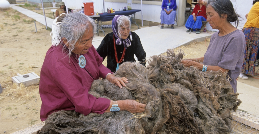 navajos, native american craftspeople, wool, churro sheep, spanish explorers, native americans, native american tribes and cultures, inspecting wool