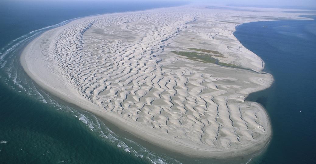isla arena, california grey whale, baja california, mexico