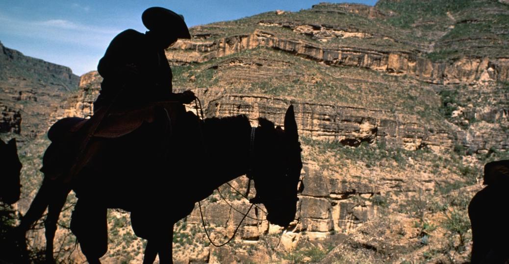 baja california, mexico, cliff, donkey