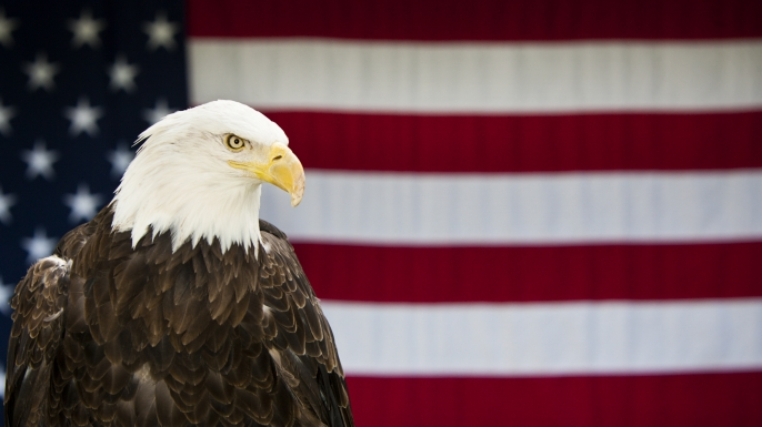 How Did The Bald Eagle Become Americas National Bird Ask History