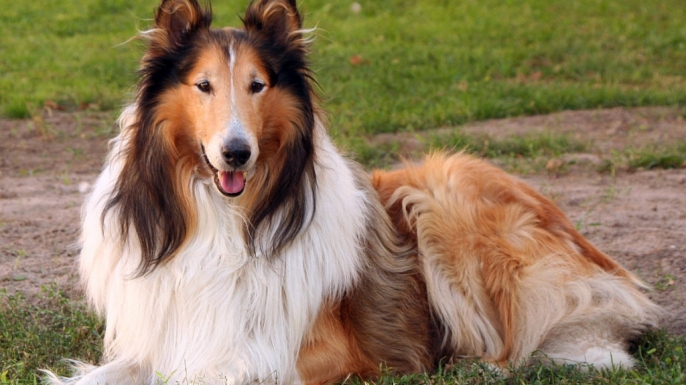 A study of dog genetics suggests that our canine companions hail from an area south of China's Yangtze River.