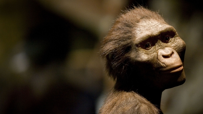 A sculptor's rendering of the hominid Australopithecus afarensis on display in 2007.